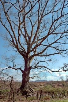 Candler Tree, NC mountains