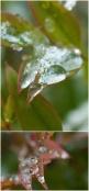 camiphoto_ice_micro_2_15_0003