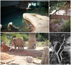 camiphoto_sandiego_zoo_0001