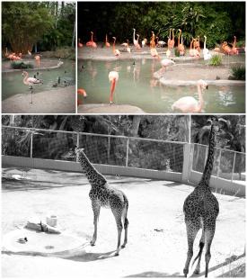 camiphoto_sandiego_zoo_0004