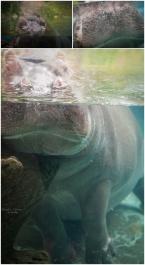 camiphoto_sandiego_zoo_0007