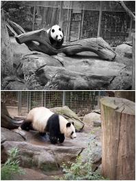 camiphoto_sandiego_zoo_0008